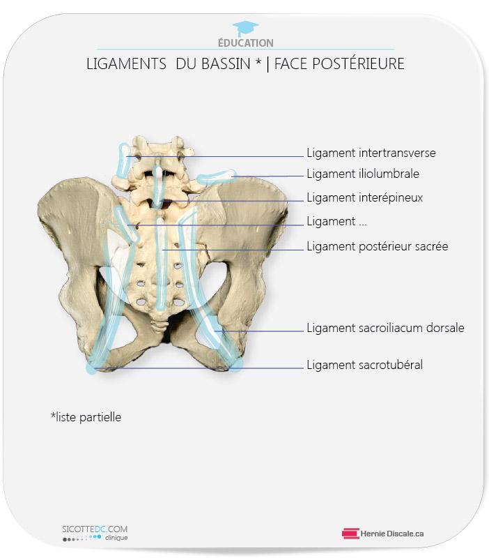 Les ligaments du joint sacro-iliaque face postérieur (une liste partielle)